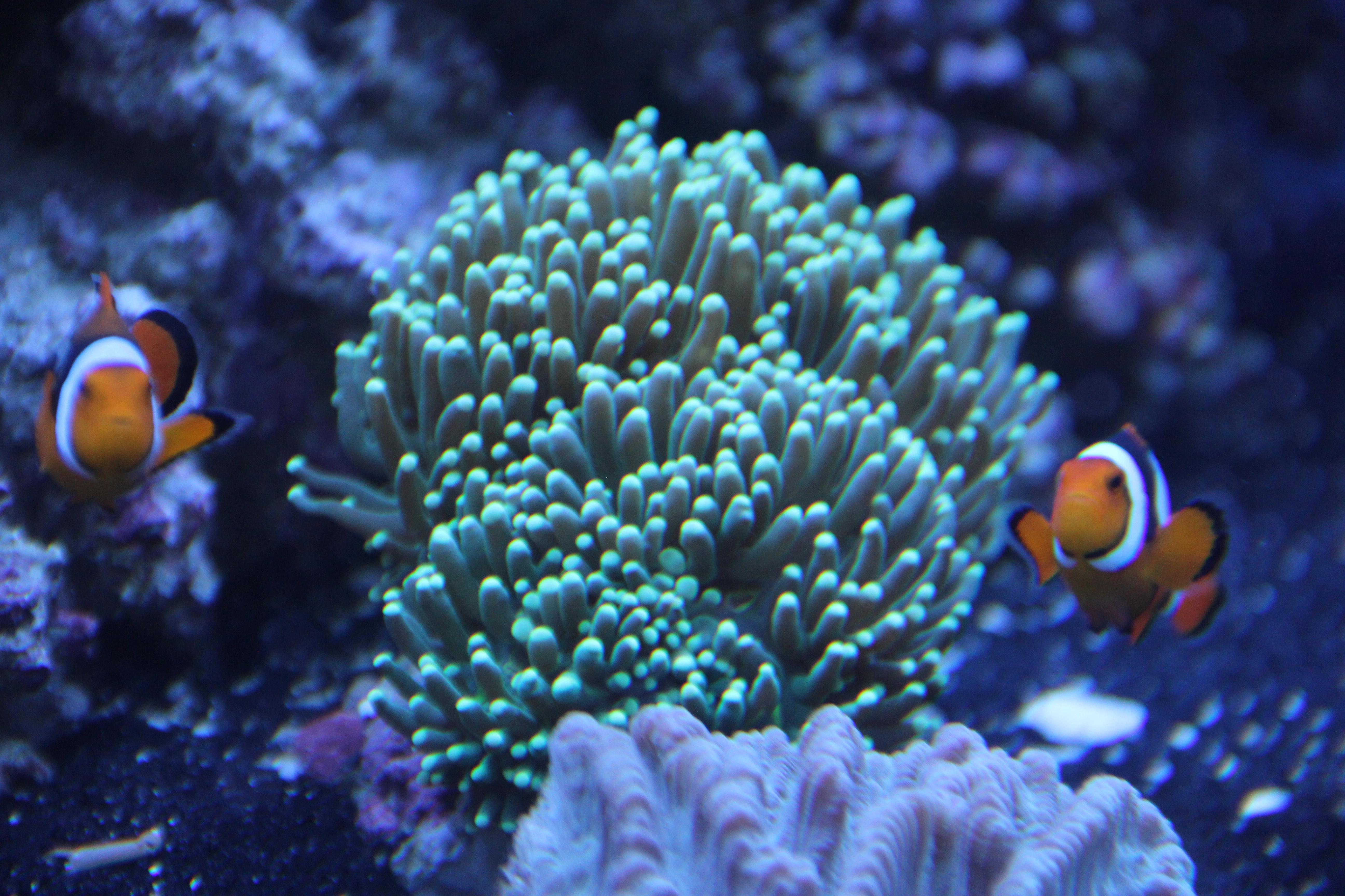 Coral May Nude Photos 33