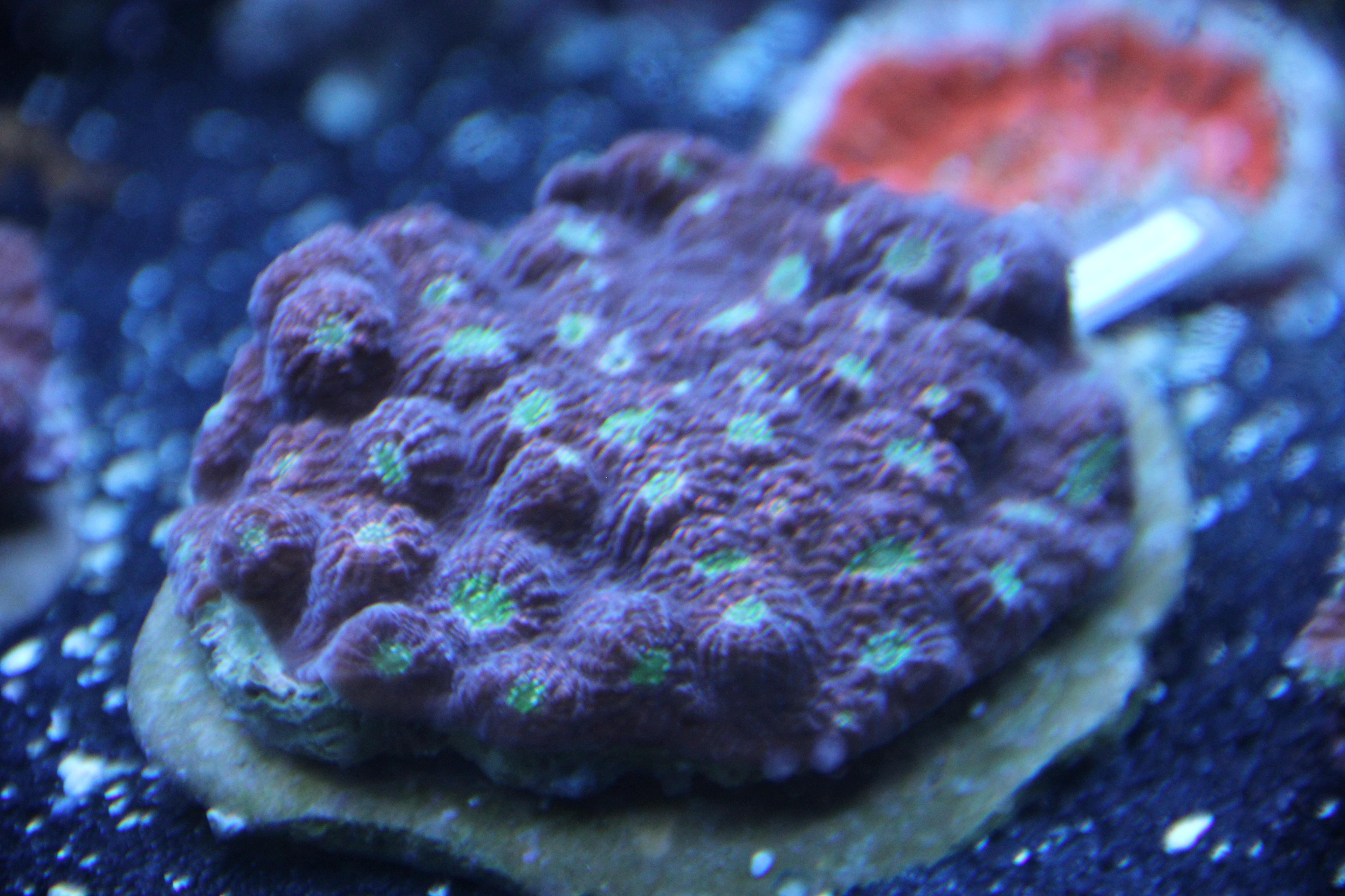 Coral May Nude Photos 24