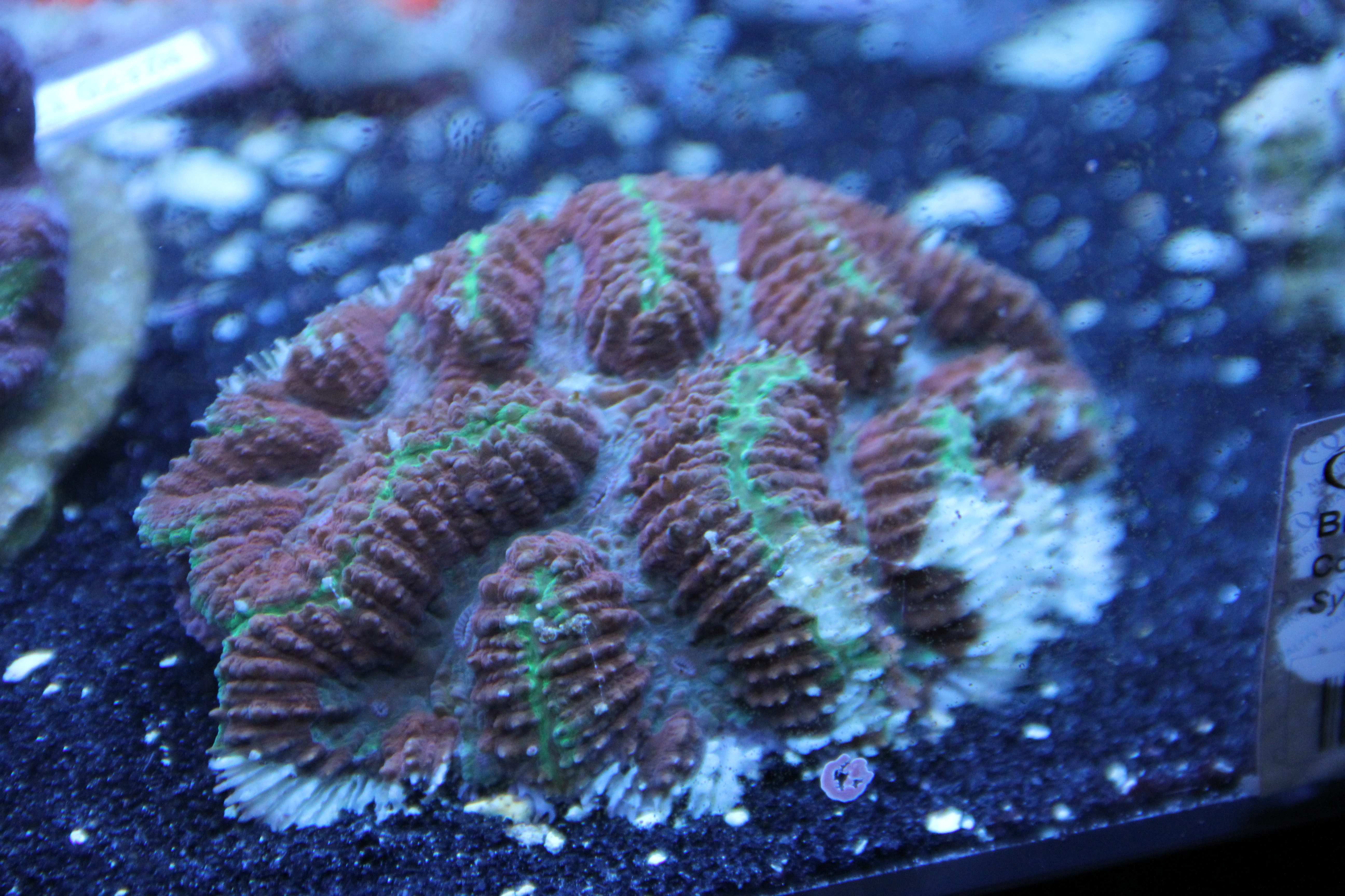 Coral May Nude Photos 65