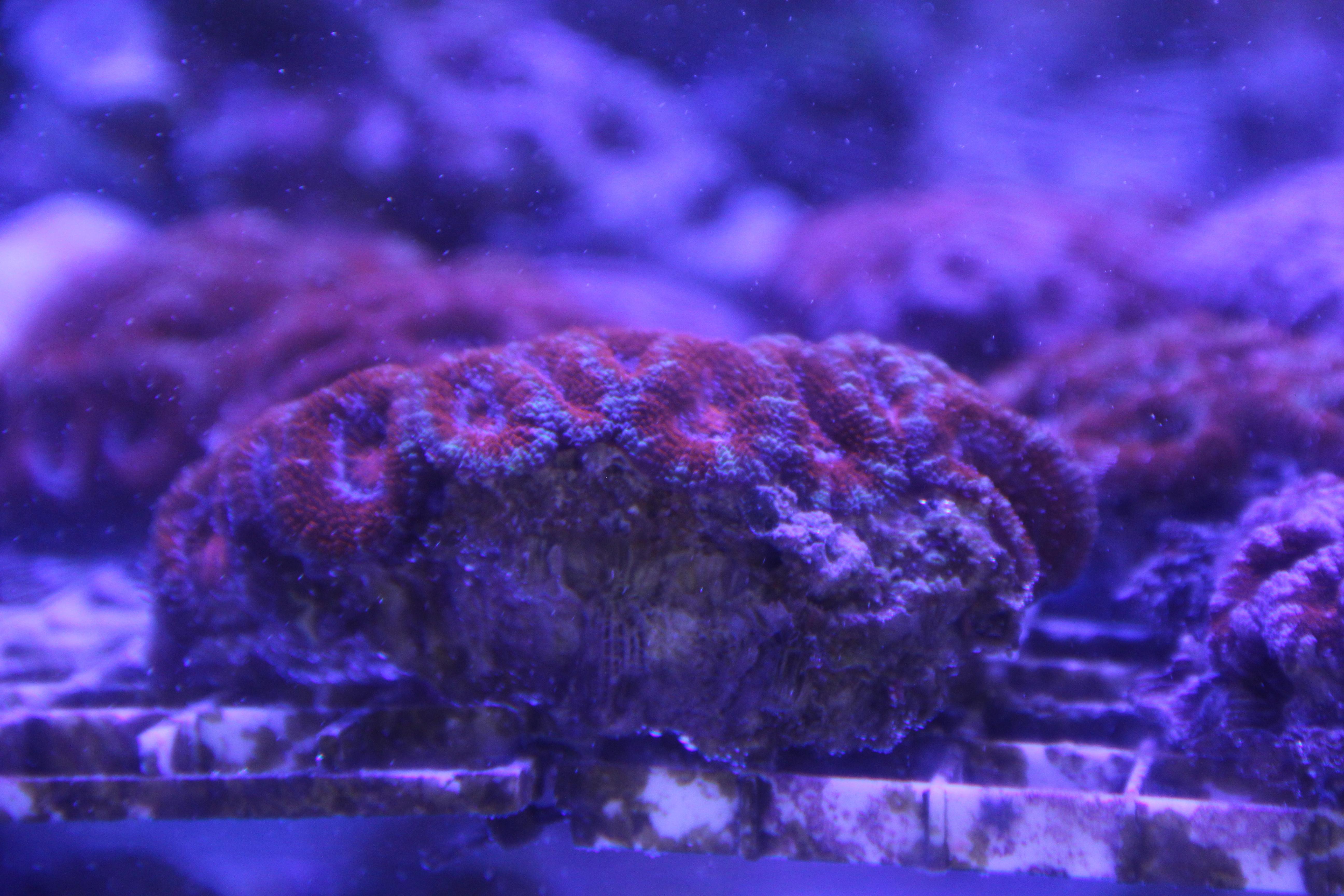 Coral May Nude Photos 21